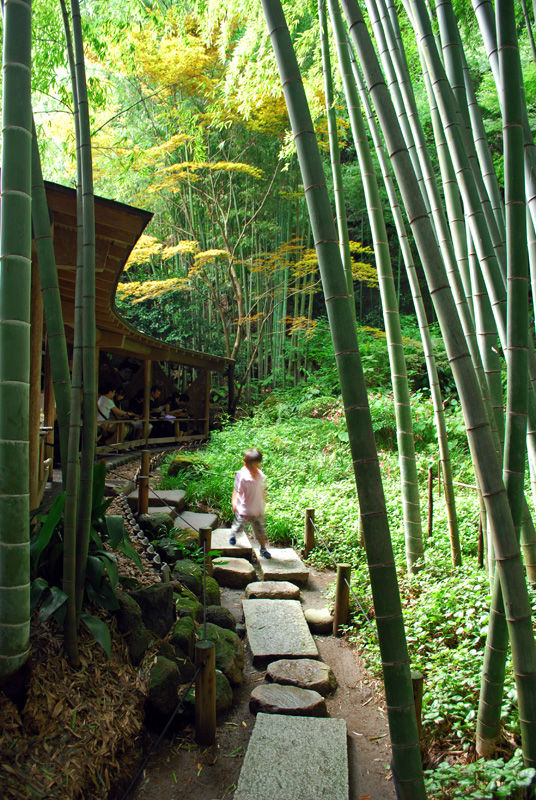 Another visit at the bamboo temple II