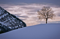 Snow landscape in Appenzell 15