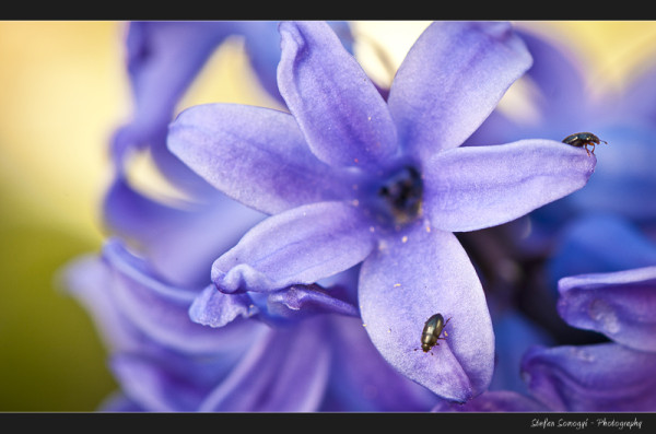 Flowers Macro IV