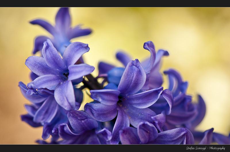 Flowers Macro V