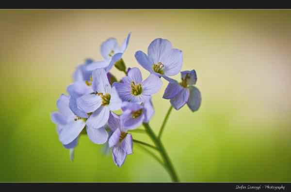 Flowers Macro VI