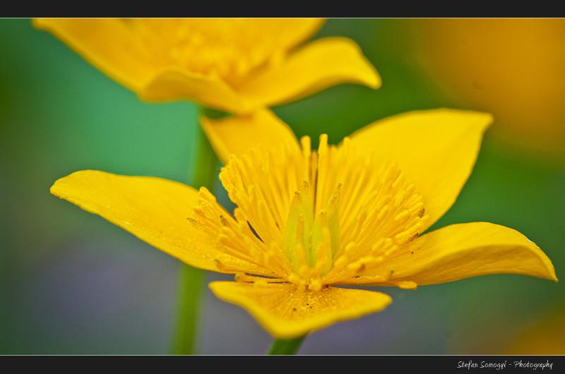 Flowers Macro VII