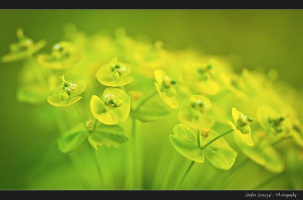 Flowers Macro IX