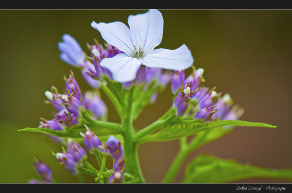 Flowers Macro X