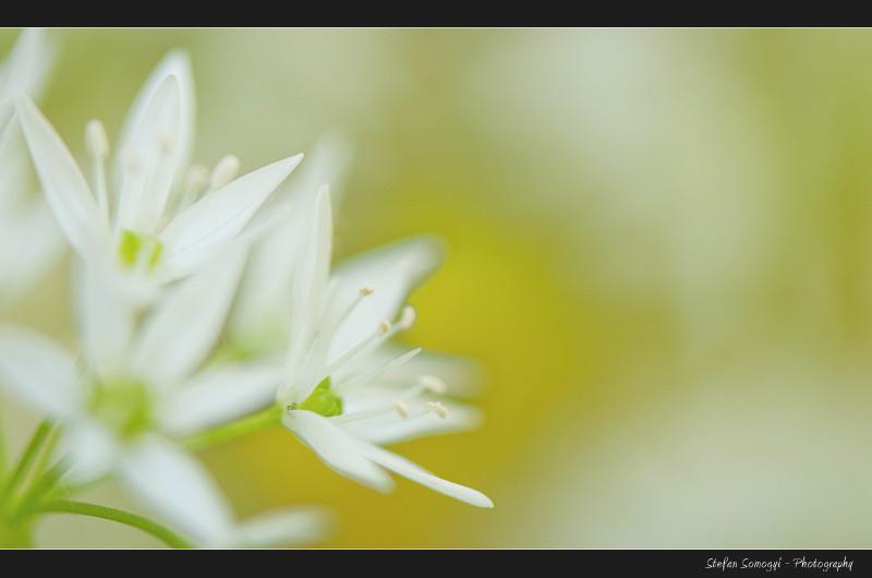 Flowers Macro XIII