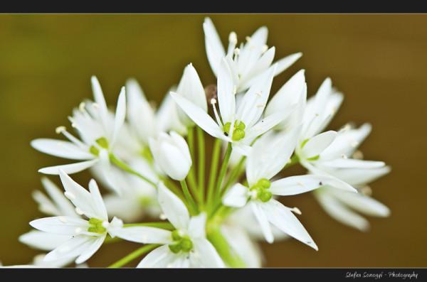 Flowers Macro XIV