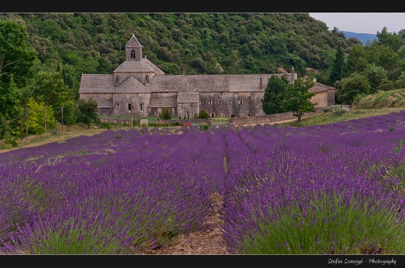 Abbey Senanque, Gorges, Vocluse, Provence, France