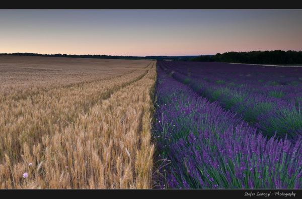 Saint-Trinit, Voucluse, Provence, France