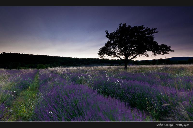 Sault, Voucluse, Provence, France