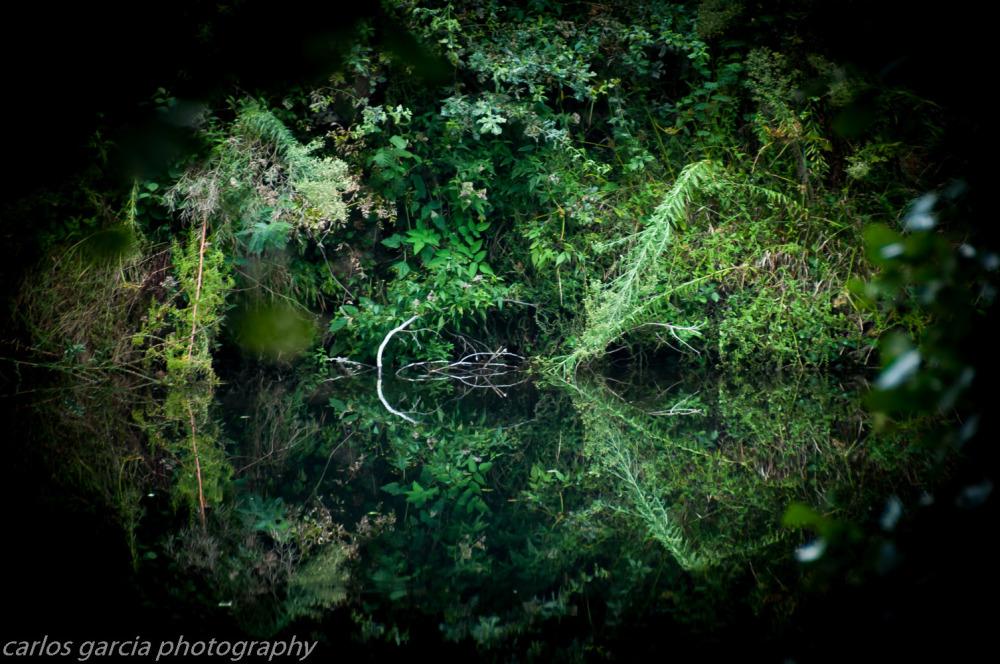 nature I