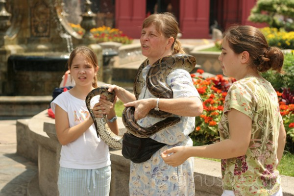 Snake handling by tourists