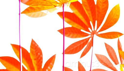Tapioca leaf