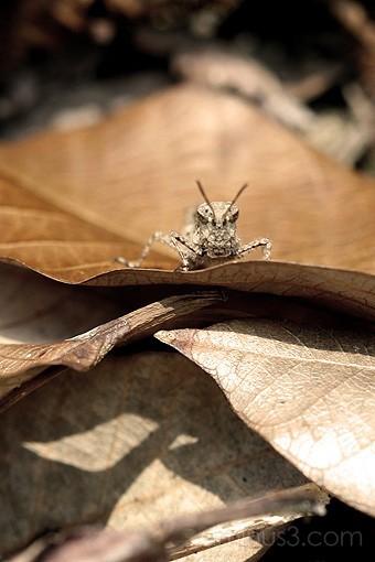 Grashopper hidden