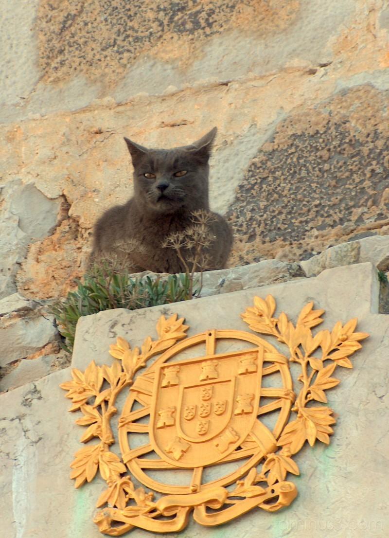 Under cat's domain