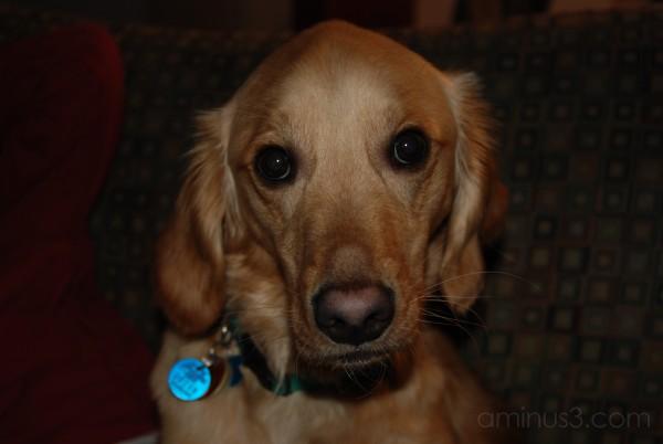 Oscar's Portrait
