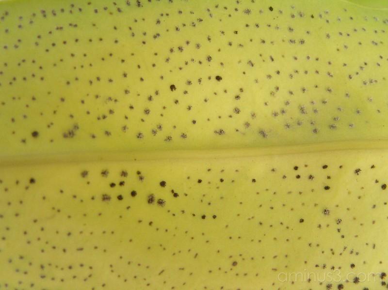 leaf, dots,