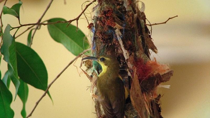 bird, nest