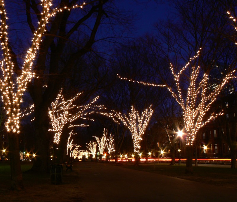 Trees covered in lights.