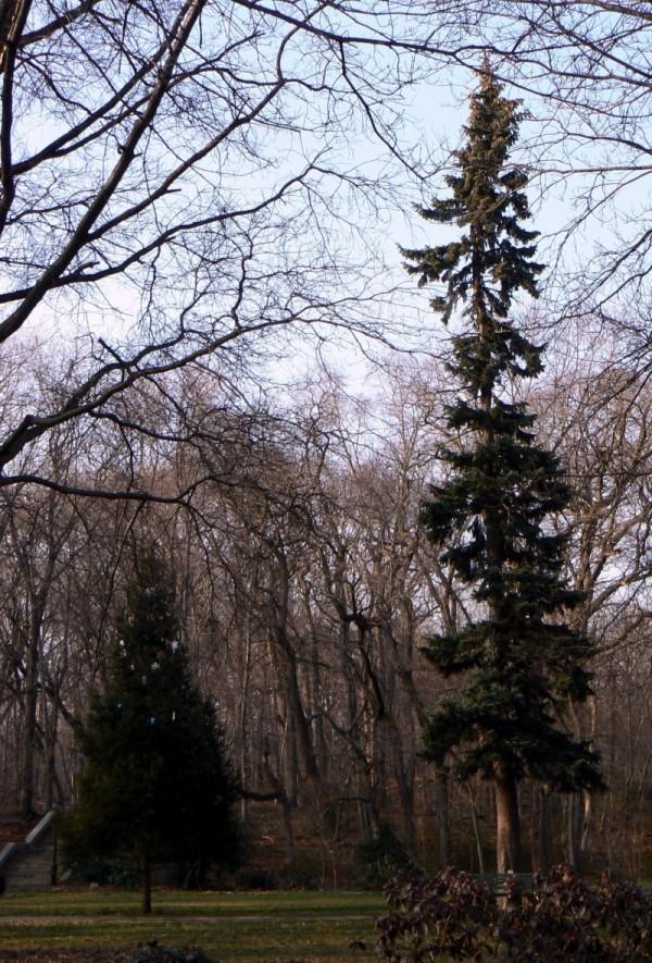 Big tree, small tree.