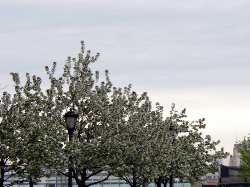 Trees frolicking in blooming spring.