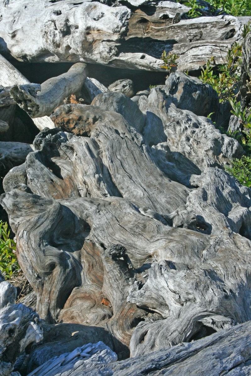 driftwood in Washington State