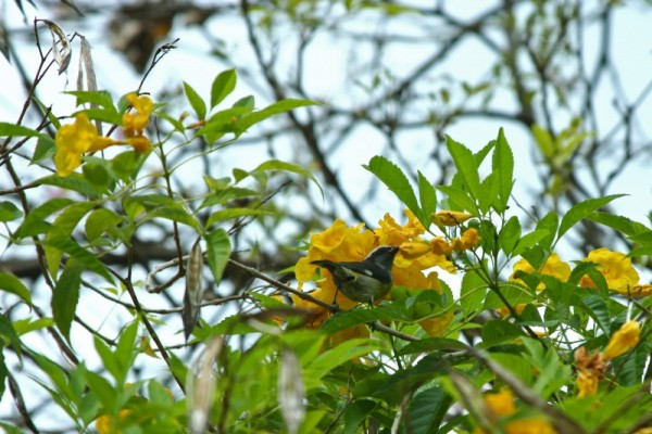 Bird with yellow flowers