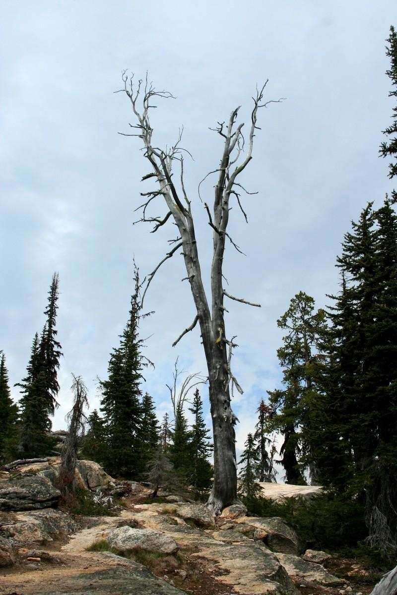 One Dead Tree