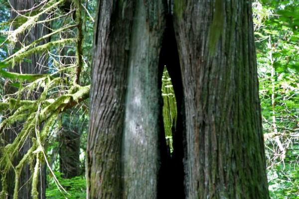 Looking through a tree in Washington