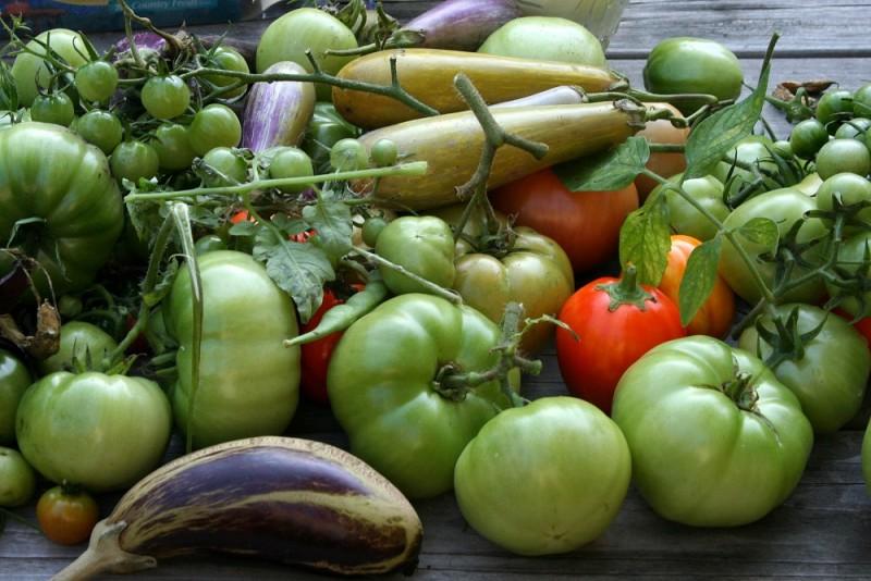 The last harvest from my summer garden