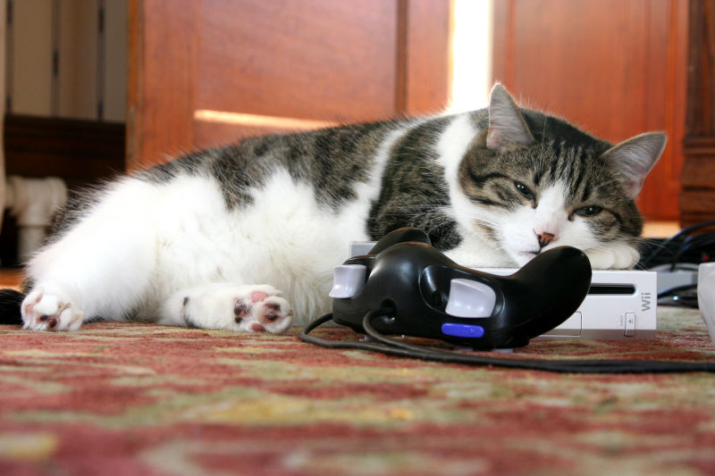 Cat sleeping on Wii game system