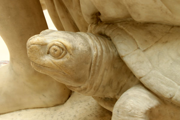 Turtle capture in marble by Antoine Coyzevox