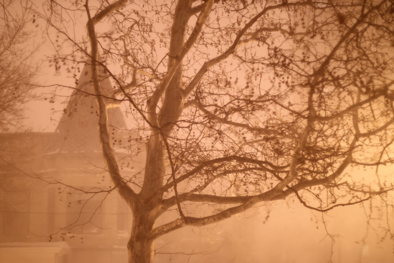 Ghostly tree in blizzard in Chicago