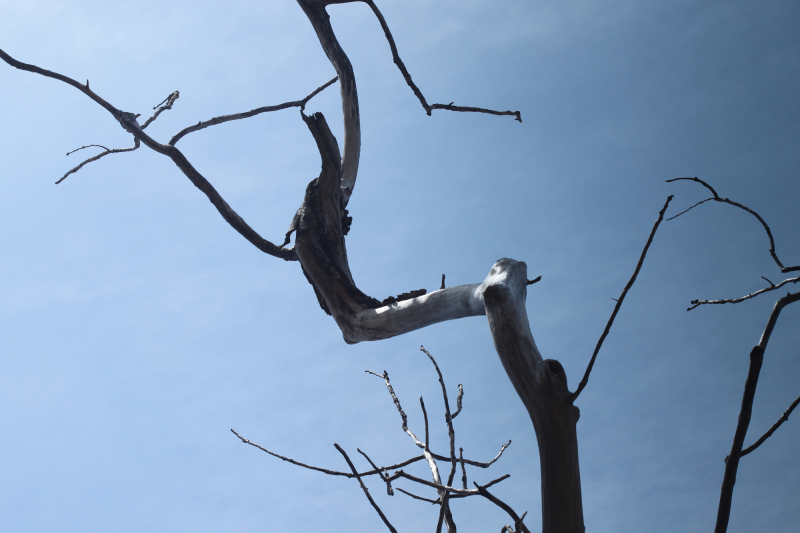Bare branches against a blue sky