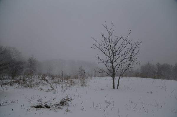 Single tree in snowstorm