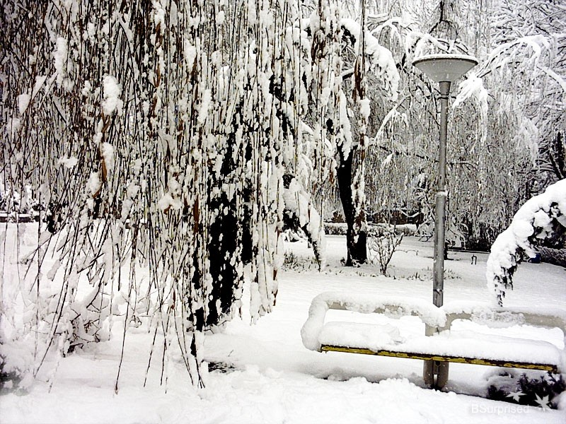 Totally Snow