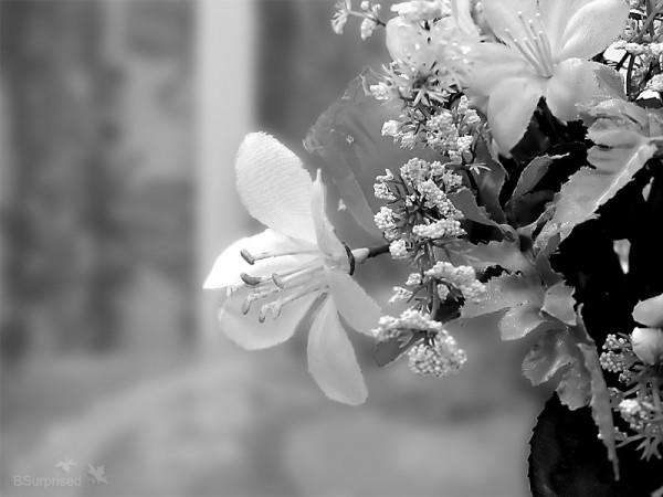 Flowers Black, Flowers White