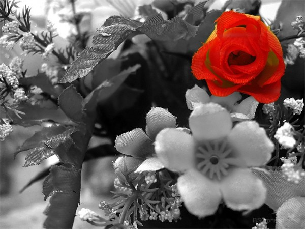 Flowers Black and White, Flowers Red