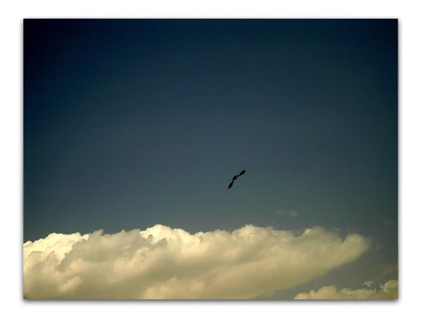 The Departure - High, Flying (I)