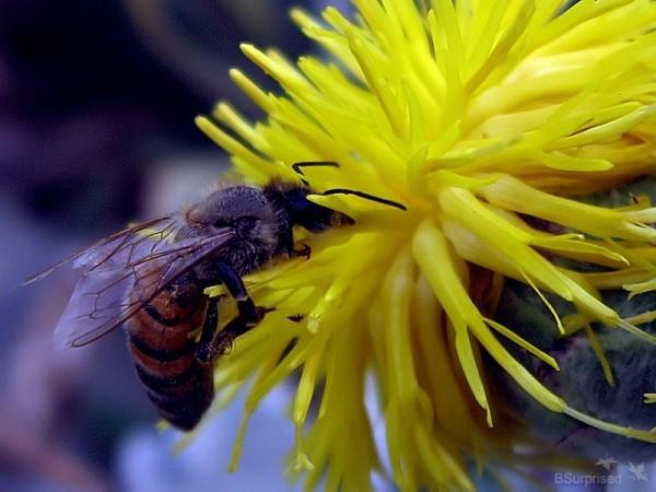Bee Story (II)