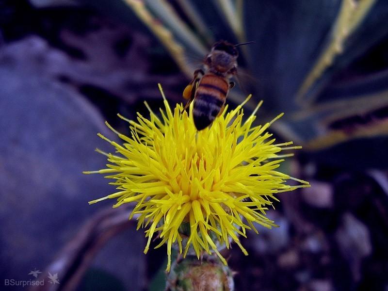 Bee Story (III)