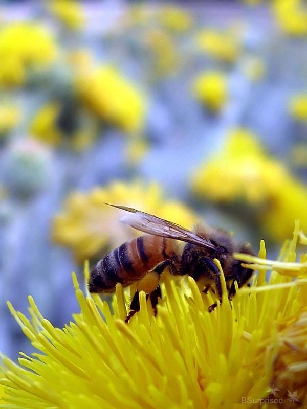 Bee Story (VI)