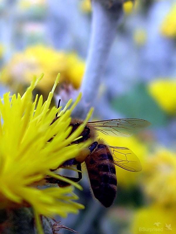 Bee Story (V)