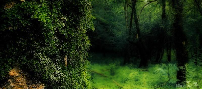 Green Dream (II)