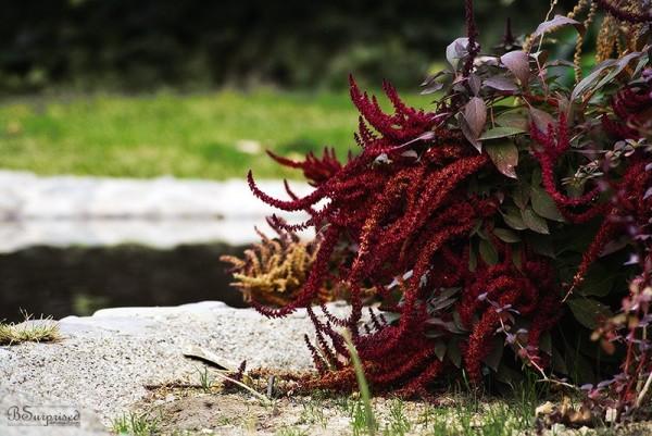 Random Plant