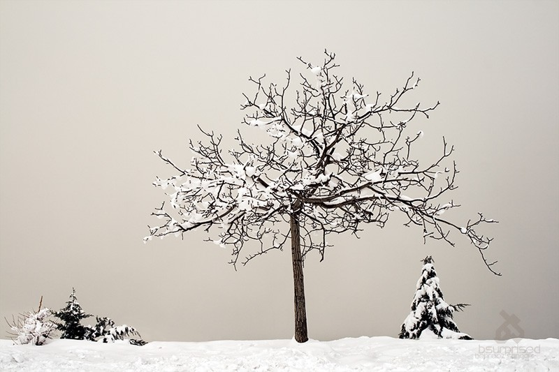 Tale of a Frozen Tree (I)