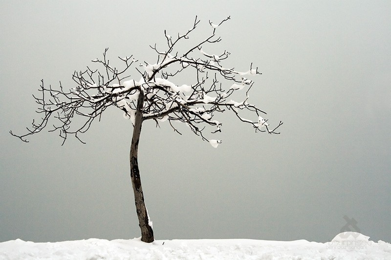 Tale of a Frozen Tree (III)