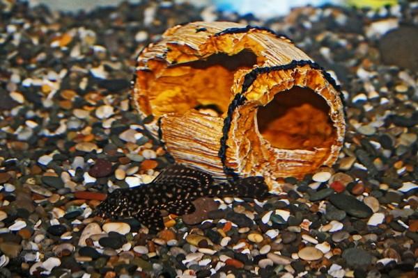 Catfish and Broken Barrel