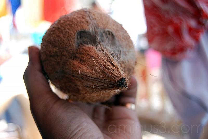 coconut bird