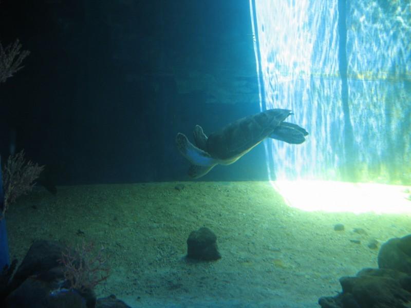 Un dia en el acuario