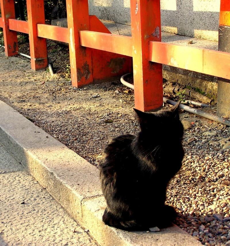 Yasaka shrine cat Kyoto Japan